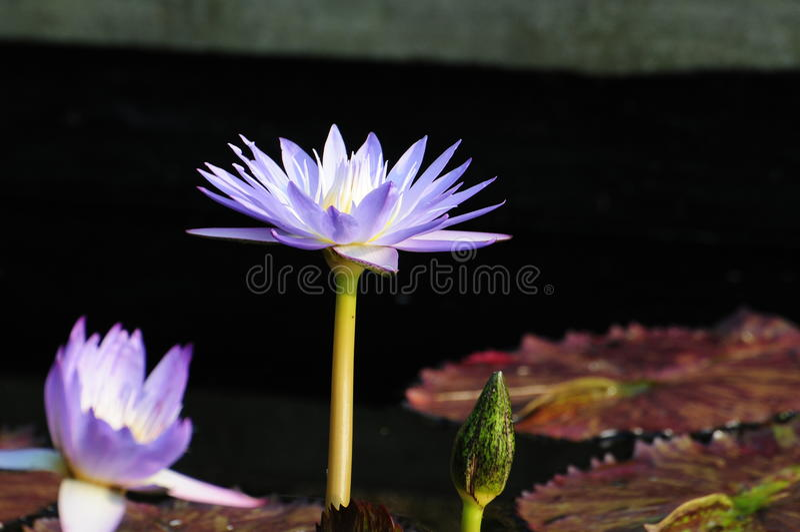 Μια από της floral ομορφιάς της φύσης στοκ φωτογραφίες με δικαίωμα ελεύθερης χρήσης