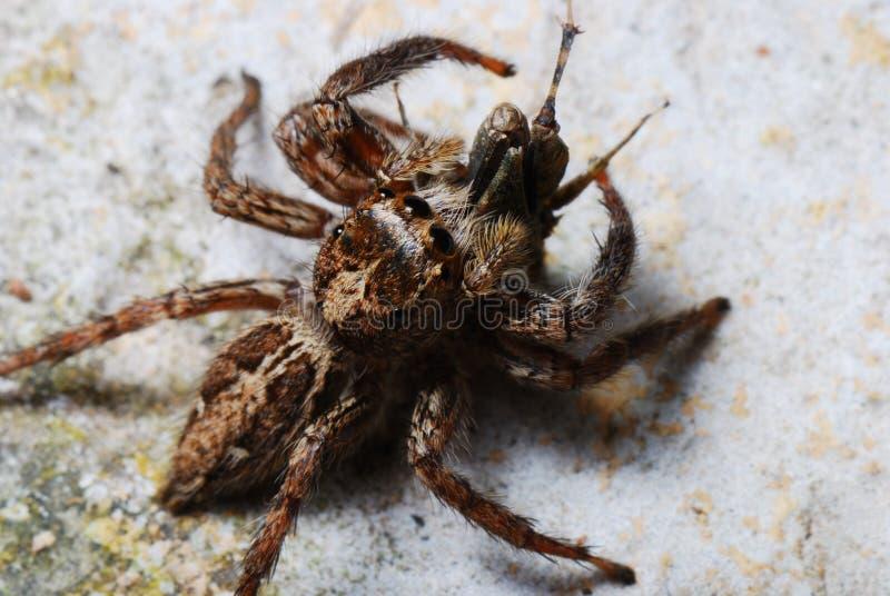 Μια αράχνη επίασε ένα θήραμα στοκ φωτογραφία με δικαίωμα ελεύθερης χρήσης
