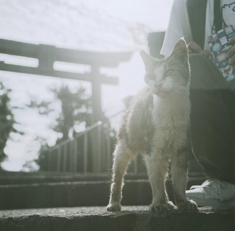 Μια γάτα μπροστά από τη λάρνακα στοκ εικόνα
