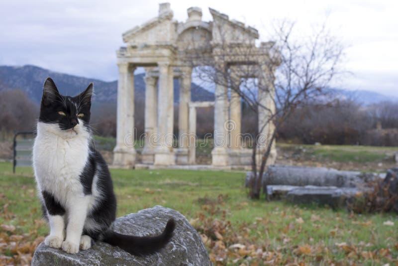 Μια γάτα μπροστά από Tetrapylon της αρχαίας πόλης Aphrodisias, Aydin/Τουρκία στοκ φωτογραφία