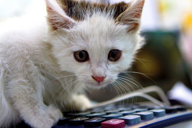 Μια γάτα παίζει στοκ εικόνα με δικαίωμα ελεύθερης χρήσης