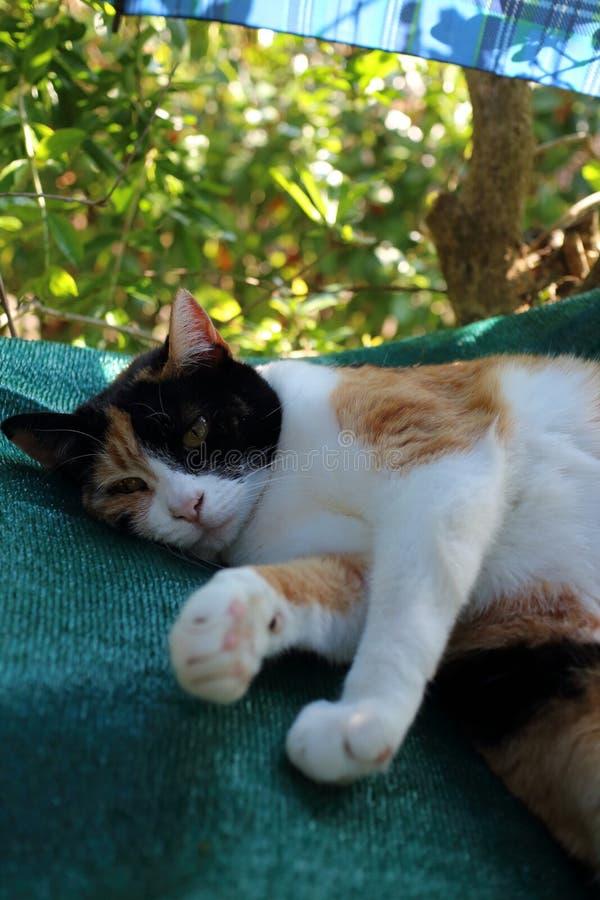 Μια γάτα παίρνει ένα υπόλοιπο σε ένα χέρι - που γίνεται hammok στοκ φωτογραφία με δικαίωμα ελεύθερης χρήσης