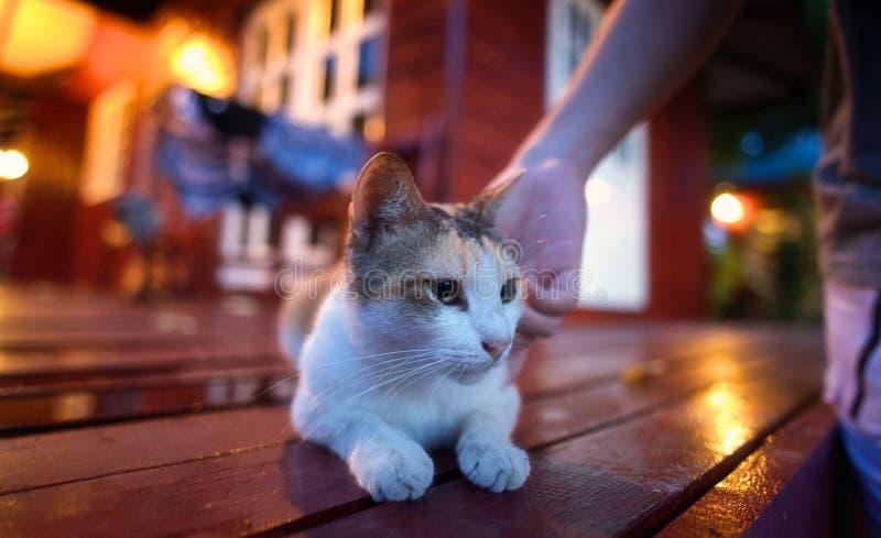 Μια γάτα που παίζεται στοκ φωτογραφίες με δικαίωμα ελεύθερης χρήσης