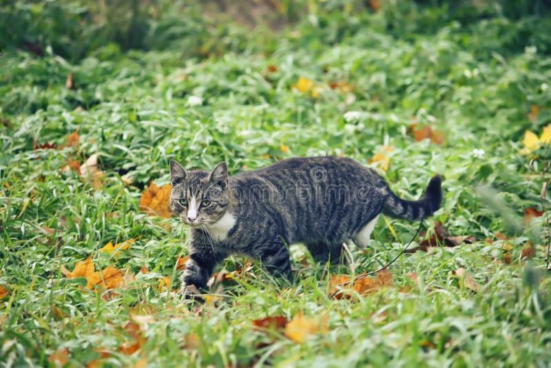 Μια γάτα στην πράσινη χλόη στοκ εικόνες