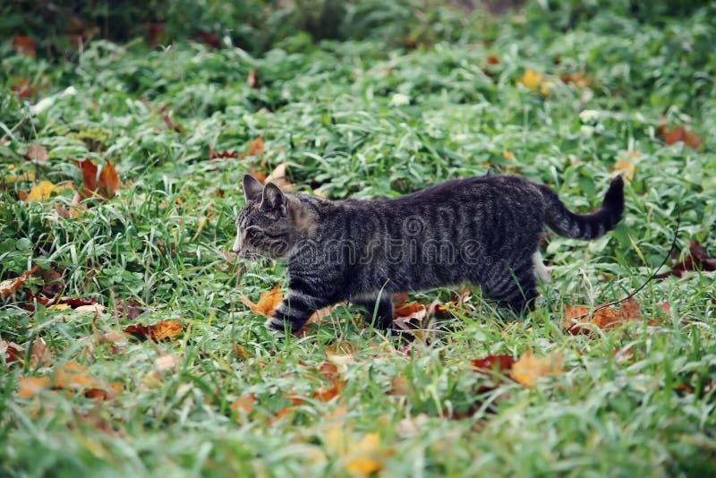 Μια γάτα στην πράσινη χλόη στοκ φωτογραφία