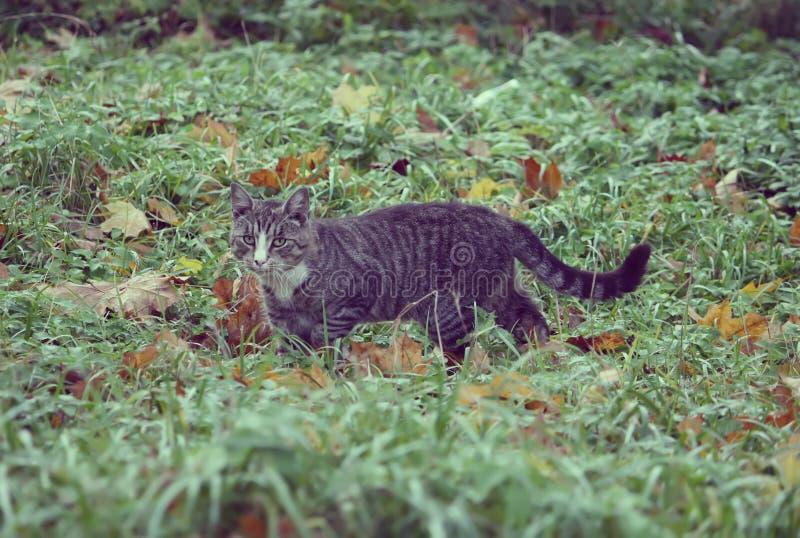 Μια γάτα στην πράσινη χλόη στοκ εικόνες με δικαίωμα ελεύθερης χρήσης