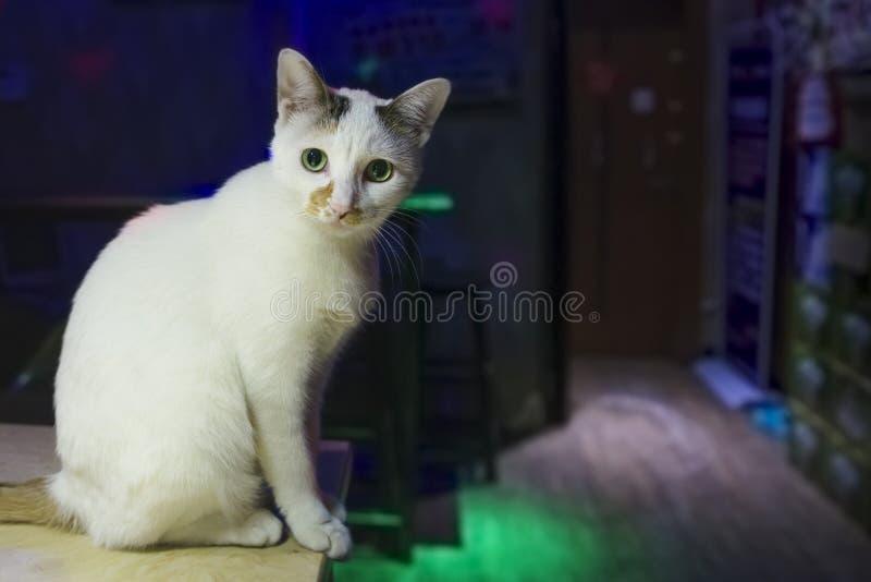 Μια γάτα στην ταβέρνα στοκ εικόνες
