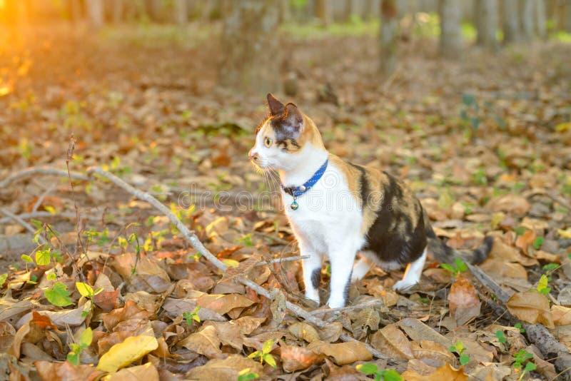 Μια γάτα στο δάσος στοκ φωτογραφία με δικαίωμα ελεύθερης χρήσης