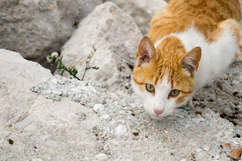 Μια γάτα στο κυνήγι στοκ εικόνες