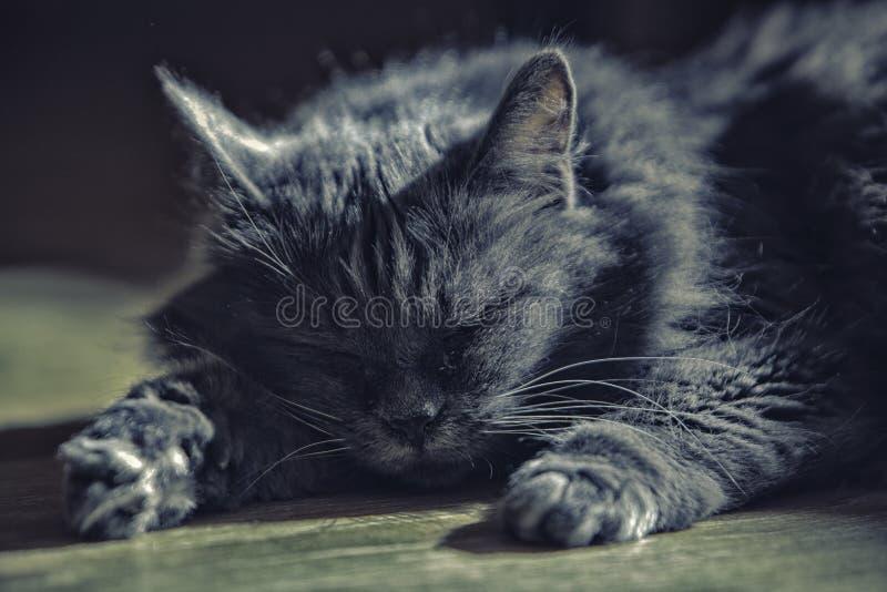 Μια γάτα του ασημένιου χρώματος βρίσκεται στο πάτωμα στοκ φωτογραφίες με δικαίωμα ελεύθερης χρήσης