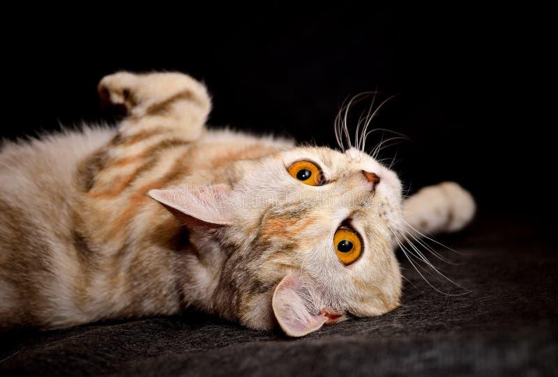 Μια γάτα στοκ εικόνα με δικαίωμα ελεύθερης χρήσης