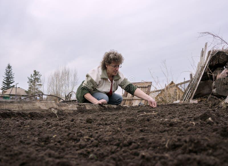 Μια γυναίκα κάθεται κοντά στα κρεβάτια και τους σπόρους σποράς στοκ εικόνες