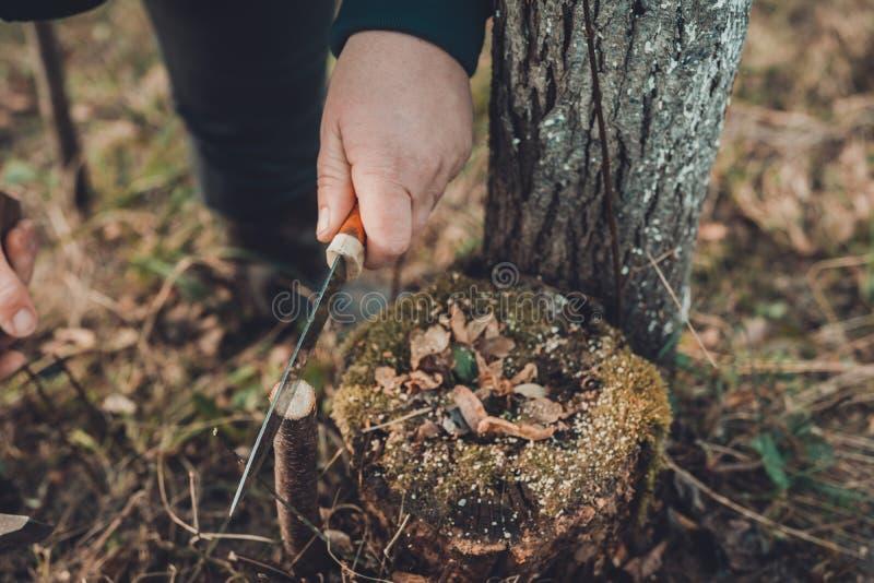 Μια γυναίκα κόβει ένα νέο δέντρο με ένα μαχαίρι για τον εμβολιασμό του κλάδου φρούτων στοκ φωτογραφία