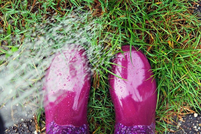 Μια γυναίκα με τις λαστιχένιες μπότες που ποτίζει το χορτοτάπητα με ένα πότισμα μπορεί και οι μπότες της στοκ φωτογραφίες