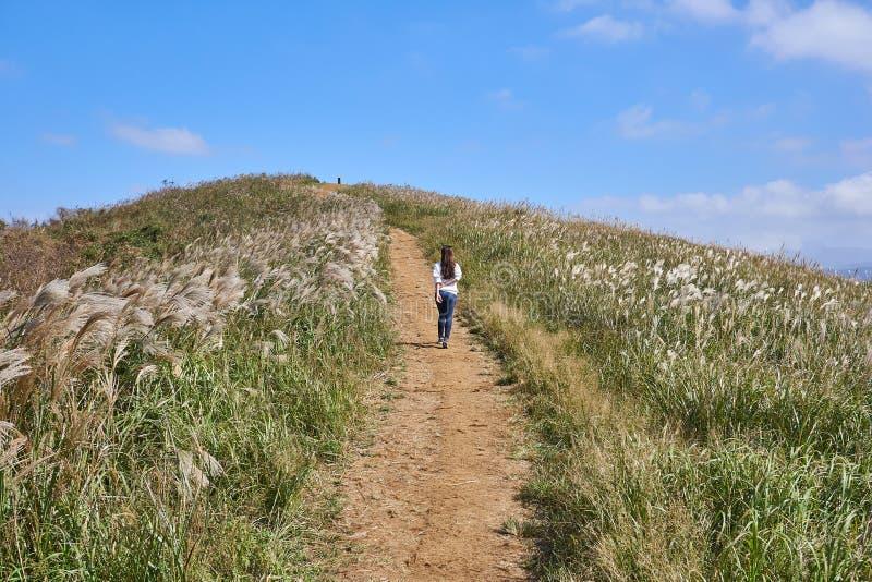 Μια γυναίκα που περπατά προς την αιχμή ενός συνόλου λόφων της χλόης φλογών κατά τη διάρκεια του φθινοπώρου στο νησί Jeju, Νότια Κ στοκ εικόνα με δικαίωμα ελεύθερης χρήσης