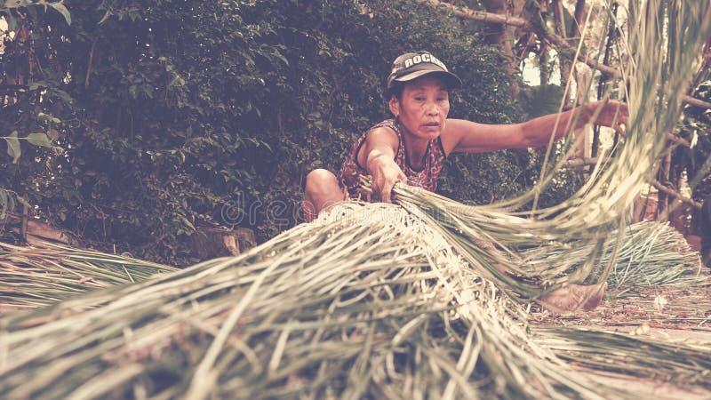 Μια γυναίκα που προετοιμάζει τη χλόη για να κάνει ένα χαλί στοκ φωτογραφία με δικαίωμα ελεύθερης χρήσης