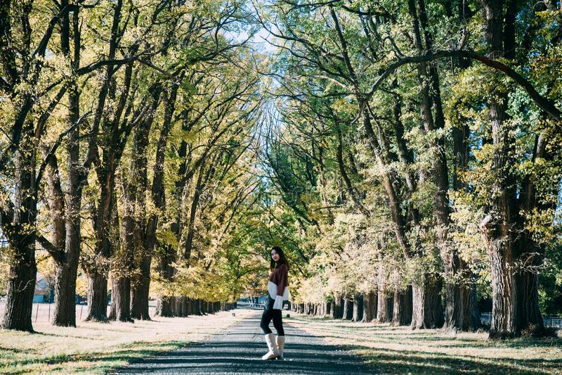 Μια γυναίκα που στέκεται στη δασική πορεία περπατήματος, φθινόπωρο στοκ φωτογραφία