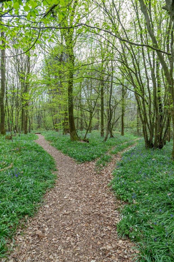 Μια διάβαση σε ένα ξύλο Bluebell στο Σάσσεξ στοκ φωτογραφίες με δικαίωμα ελεύθερης χρήσης