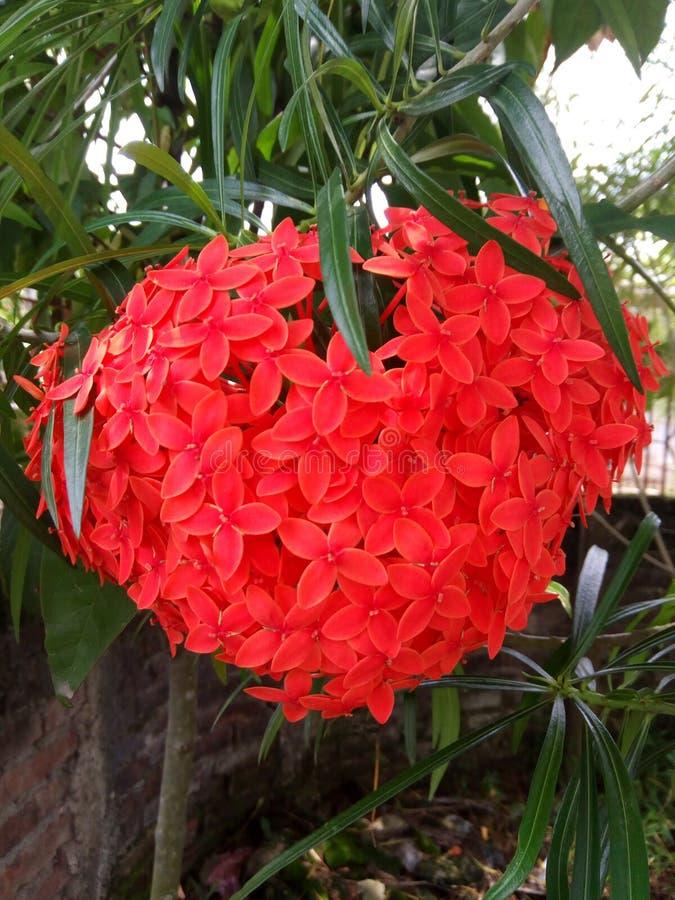 Μια εικόνα ενός κόκκινου λουλουδιού στοκ φωτογραφίες με δικαίωμα ελεύθερης χρήσης