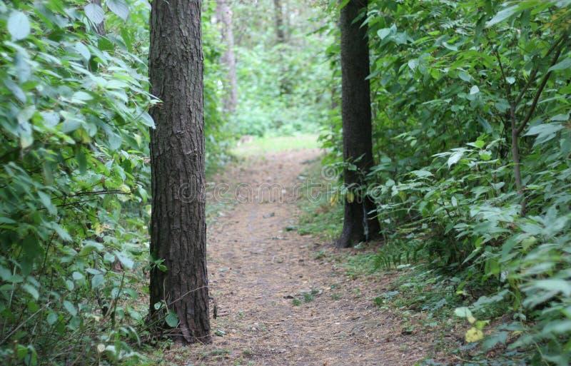 Μια ειρηνική πορεία που εξαφανίζεται στα βάθη του παλαιού πάρκου με τα δέντρα και τα πυκνά αλσύλλια των πράσινων θάμνων στοκ εικόνες