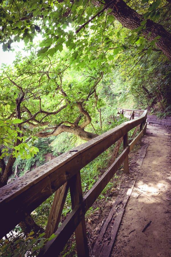 Μια ειρηνική στιγμή στο δάσος στοκ φωτογραφίες με δικαίωμα ελεύθερης χρήσης
