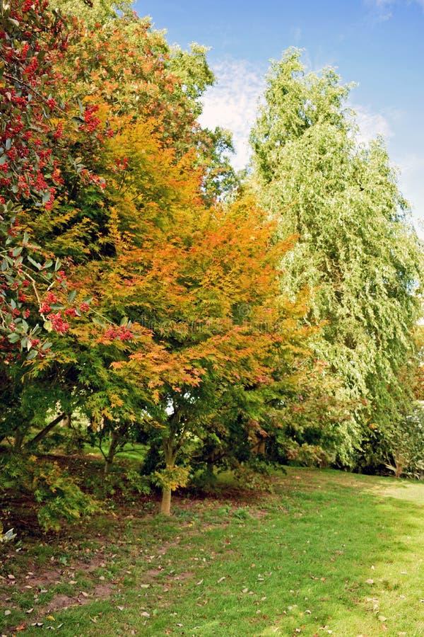 Μια επιλογή όλων των των των διαφορετικών μορφών, μεγεθών και χρωμάτων του διαφορετικού δέντρου στοκ εικόνα με δικαίωμα ελεύθερης χρήσης