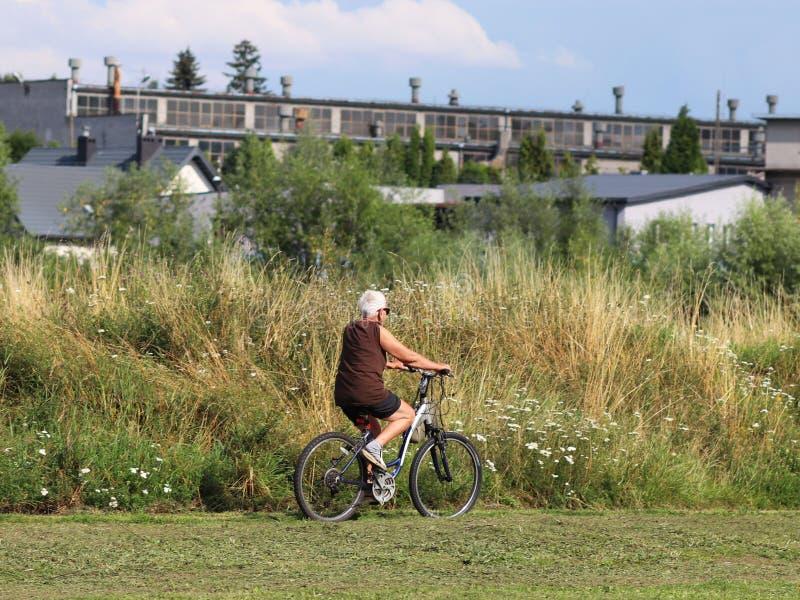 Μια ηλικιωμένη γκρίζος-μαλλιαρή γυναίκα οδηγά ένα ποδήλατο μεταξύ των πρασίνων Ένα υγιές και ενεργό μέρος της ζωής Οικολογική μετ στοκ εικόνες