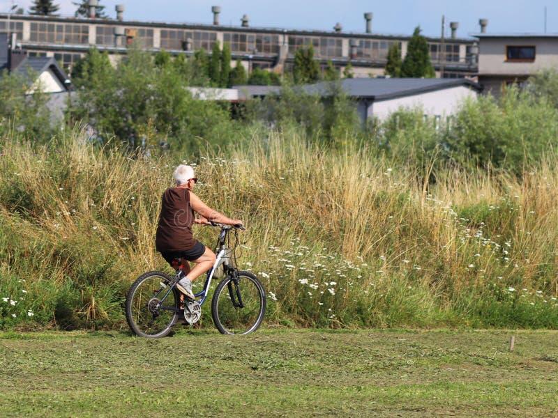 Μια ηλικιωμένη γκρίζος-μαλλιαρή γυναίκα οδηγά ένα ποδήλατο μεταξύ των πρασίνων Ένα υγιές και ενεργό μέρος της ζωής Οικολογική μετ στοκ εικόνα