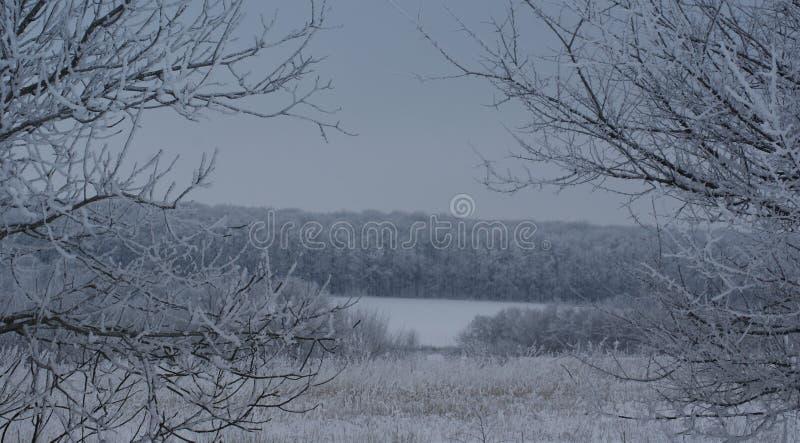 Μια θλιβερή χειμερινή ημέρα ενισχύει την εντύπωση του μυστικού της κοιμισμένης φύσης στοκ φωτογραφία με δικαίωμα ελεύθερης χρήσης