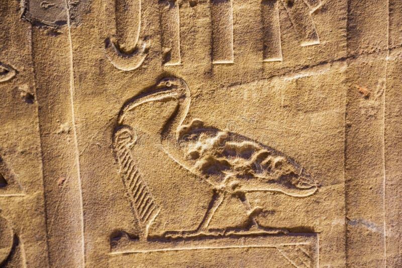 Μια θρεσκιόρνιθα hieroglyph στο ναό Horus στοκ φωτογραφίες