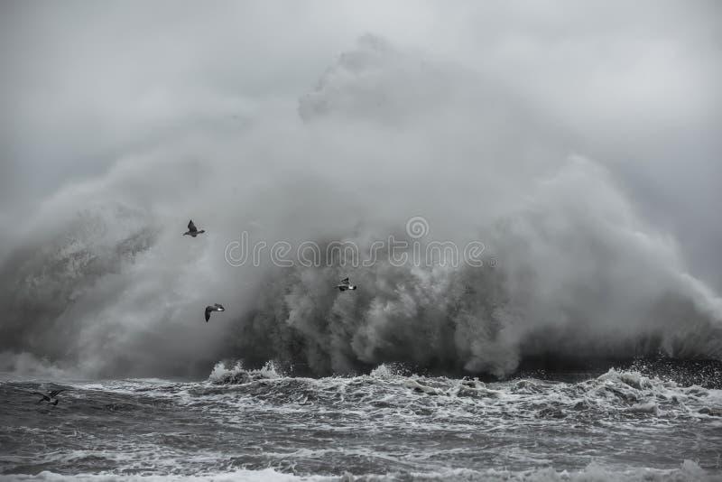 Μια θύελλα εν πλω, ο ωκεανός, ένα γιγαντιαίο κύμα και seagulls στοκ εικόνες με δικαίωμα ελεύθερης χρήσης