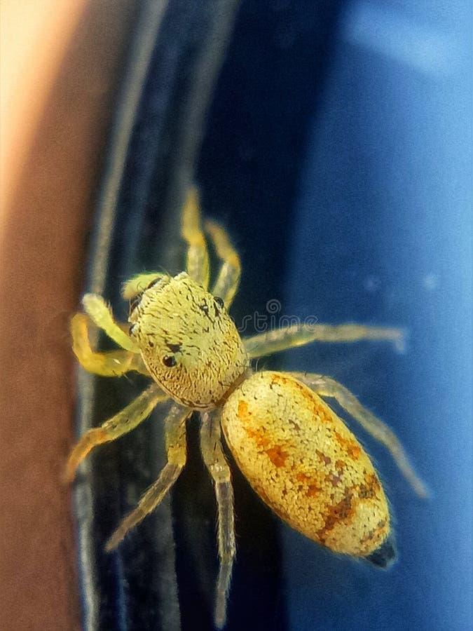 Μια κίτρινη αράχνη άλματος στο ρολόι μου στοκ εικόνες με δικαίωμα ελεύθερης χρήσης
