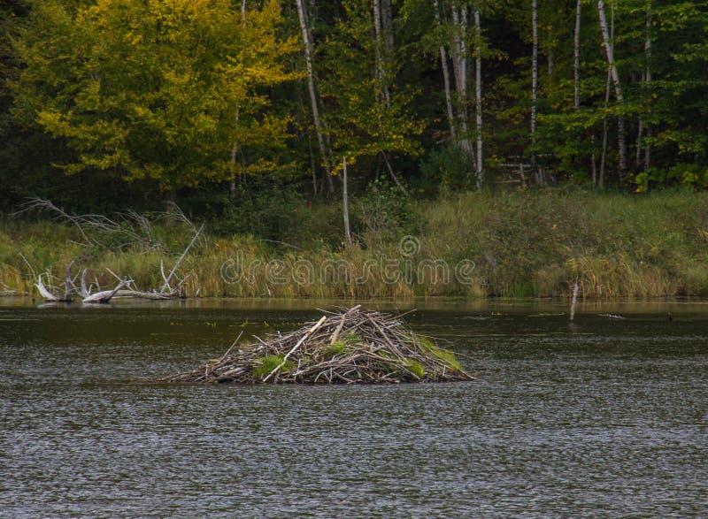 Μια καλύβα καστόρων στο εθνικό πάρκο Acadia στοκ φωτογραφία