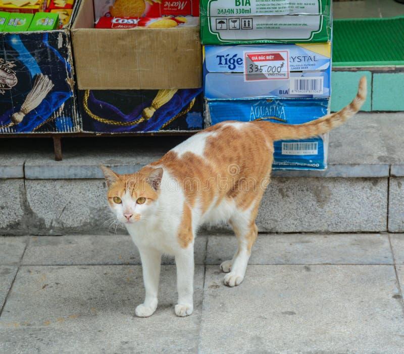 Μια καφετιά γάτα στο σπίτι επαρχίας στοκ εικόνες