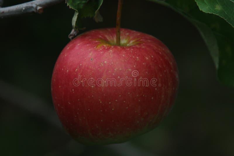 Μια κινηματογράφηση σε πρώτο πλάνο του κόκκινου μήλου στοκ φωτογραφία με δικαίωμα ελεύθερης χρήσης