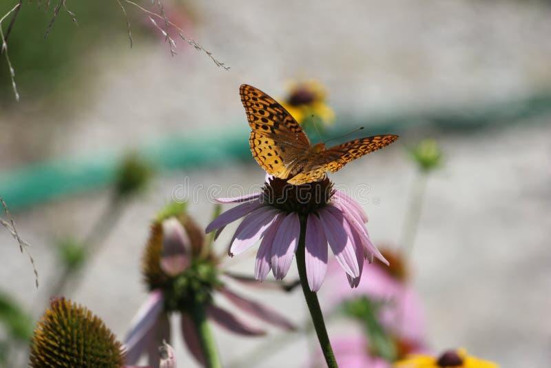 Μια κινηματογράφηση σε πρώτο πλάνο μιας πεταλούδας στοκ εικόνες