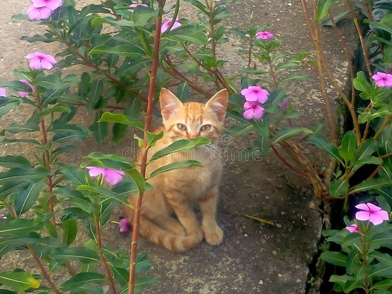 Μια κρυμμένη γάτα! στοκ φωτογραφία με δικαίωμα ελεύθερης χρήσης