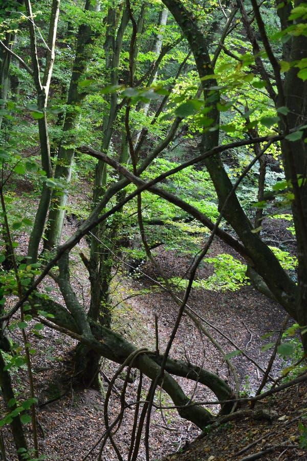 Μια κρυφή κοιλάδα στο δάσος στοκ φωτογραφίες με δικαίωμα ελεύθερης χρήσης