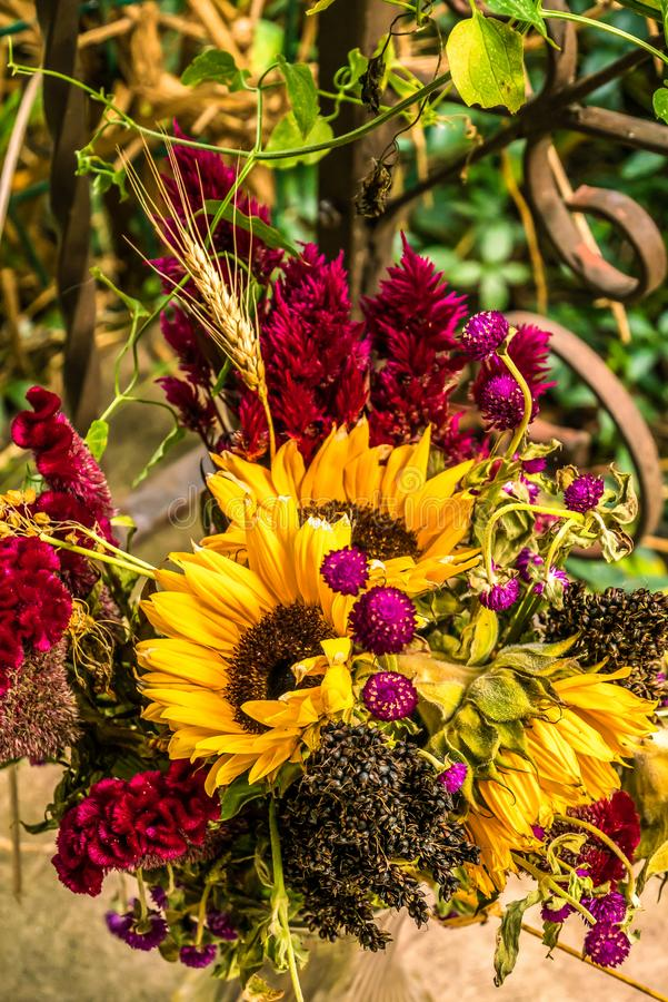 Μια λαμπρά χρωματισμένη ανθοδέσμη φθινοπώρου με τους ηλίανθους, θερμή συγκομιδή στοκ εικόνες