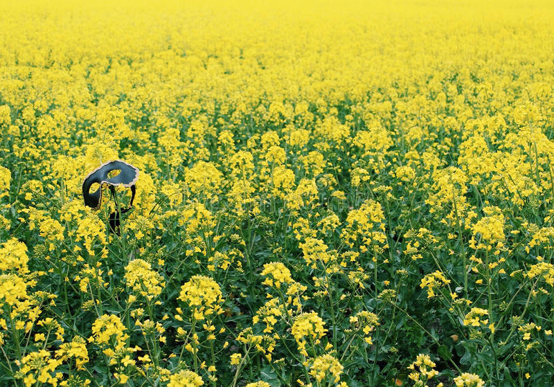 Μια μάσκα στον κίτρινο τομέα στοκ εικόνες με δικαίωμα ελεύθερης χρήσης