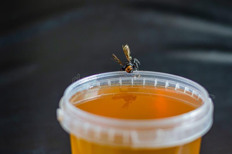 Μια μεγάλη μέλισσα κάθεται στην άκρη ενός πλήρους κάδου του μελιού Ακατέργαστο φυσικό μέλι r Πυροβολισμός σε επίπεδο ματιών στοκ φωτογραφία με δικαίωμα ελεύθερης χρήσης