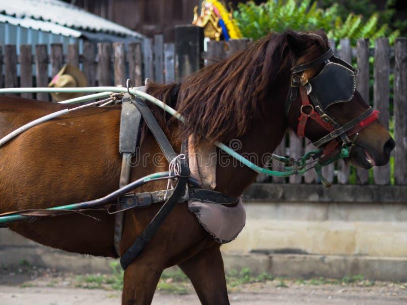 Μια μικρή γάτα του αλόγου στοκ εικόνες με δικαίωμα ελεύθερης χρήσης
