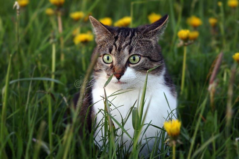 Μια μικρή γάτα το βράδυ σε ένα κυνήγι ποντικιών στον τομέα στοκ φωτογραφίες με δικαίωμα ελεύθερης χρήσης
