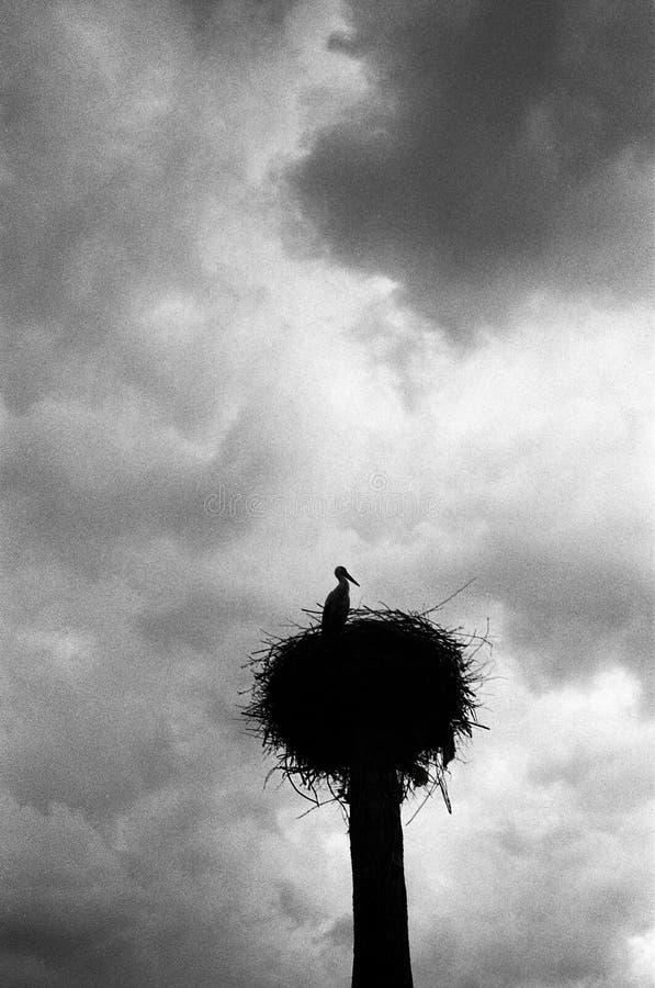 Μια μόνη σκιαγραφία ενός πελαργού σε μια φωλιά ενάντια στο σκηνικό ενός θυελλώδους ουρανού στοκ εικόνες