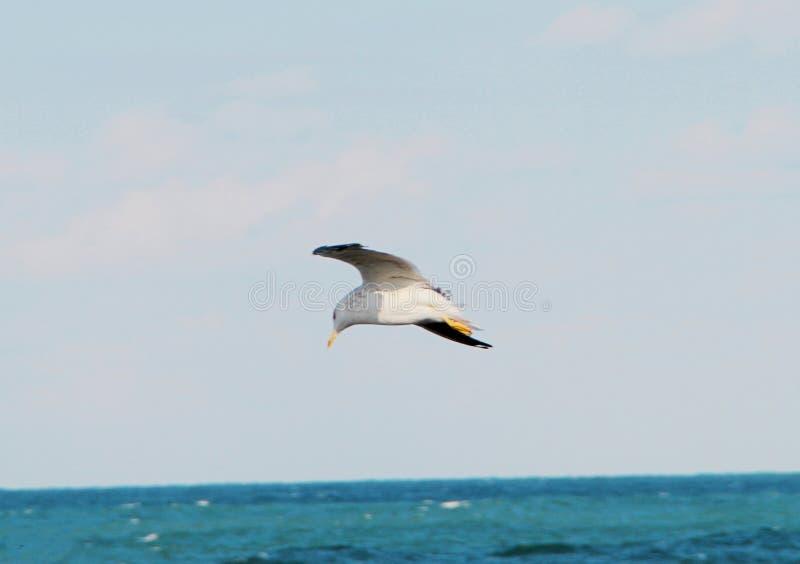 Μια μύγα πουλιών στοκ φωτογραφία με δικαίωμα ελεύθερης χρήσης