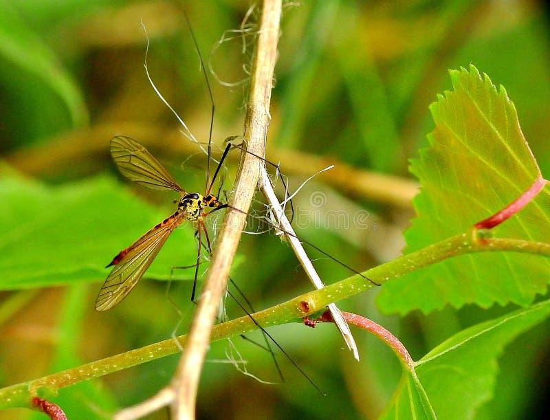 Μια μύγα σε έναν μίσχο στοκ φωτογραφία με δικαίωμα ελεύθερης χρήσης
