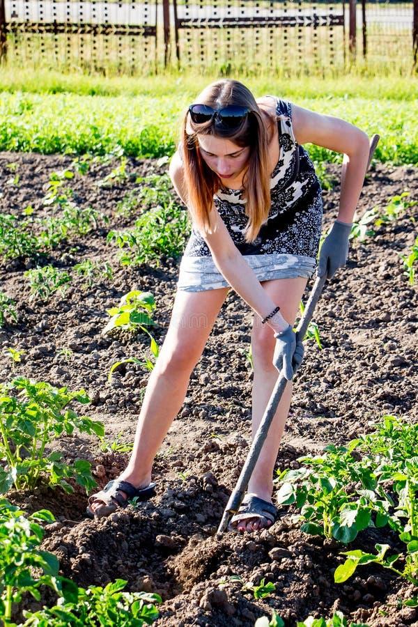 Μια νέα γυναίκα επεξεργάζεται ένα κρεβάτι κήπων σε ένα farm_ στοκ εικόνα