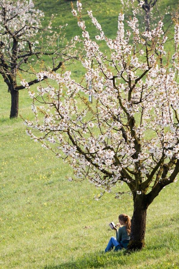 Μια νέα γυναίκα παίρνει το υπόλοιπο κάτω από ένα ανθίζοντας δέντρο κερ στοκ φωτογραφία