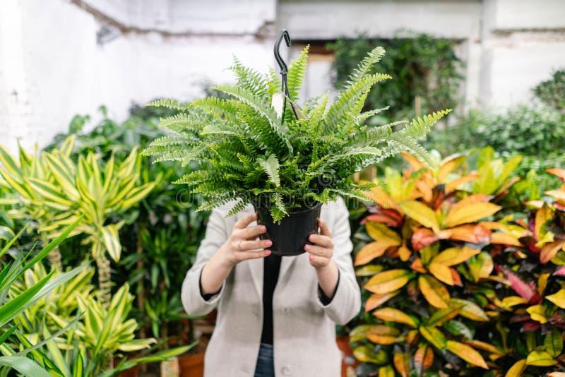 Μια νέα γυναίκα που κρατά ένα Nephrolepis φυτεύει, φτέρη, επιλέγει εγκαταστάσεις για το σπίτι Κρύψιμο πίσω από τον Πολλοί διαφορε στοκ φωτογραφία