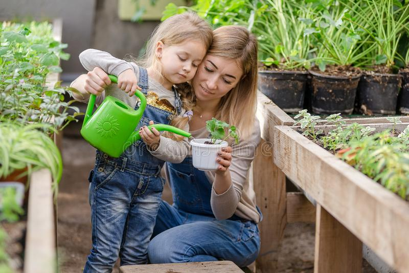 Μια νεαρή γυναίκα με μια μικρή κόρη φυτεύει ένα φυτό σε μια κατσαρόλα στοκ εικόνα